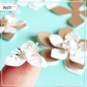 mamassachen Blütenpracht Blumen Blütenpracht blueten